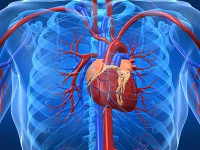 بیماری های قلبی - عروقی Heart