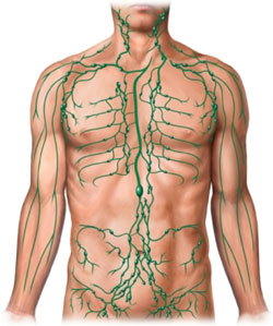 lymph غدد لنفاوی